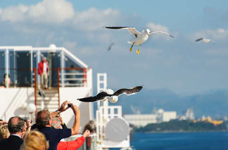 People feed seagulls on cruise ship Stock Photo - 13095735