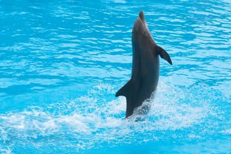 Dolphin show Stock Photo - 13930909