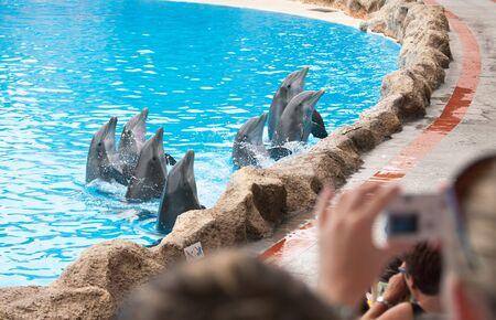 grampus: Loro park dolphin show