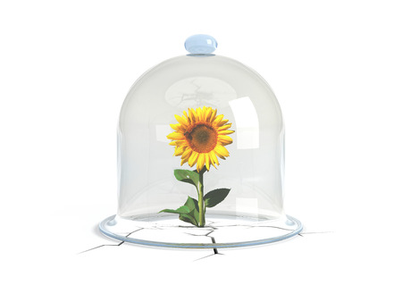 struck: A glass dome covers the sunflower, which overcame all obstacles, struck the ground and raised! Protect the environment!