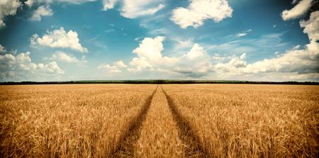 麦畑から道路。風景