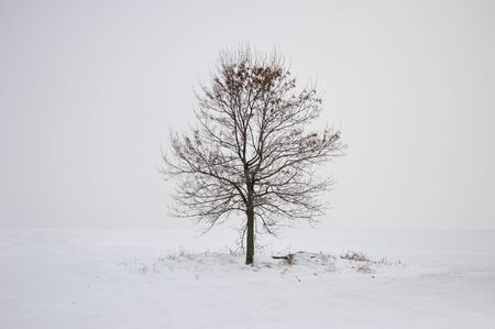 lonely tree: Winter lonely tree on the white snow Stock Photo