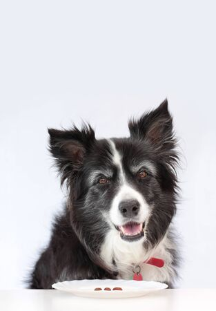 Elderly border collie dog happy even though shes on a diet pet weight;loss