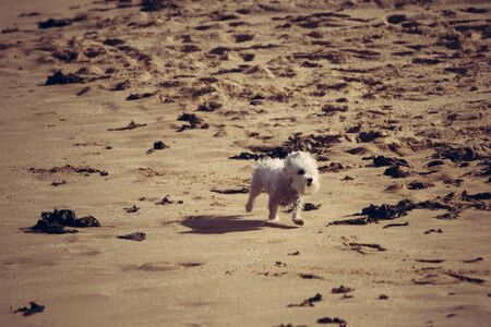 Little crazy dog playing on the sand Stock Photo