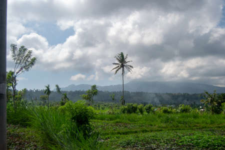 Landscae of Bali, with green fields and nature cloudy day 版權商用圖片