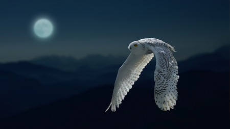 Snow owl in the moonlight