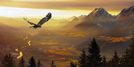 Golden Eagle flying in sunset