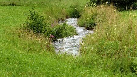 A stream flows through a meadow
