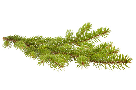 christmassy: Fir branch