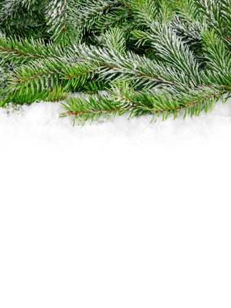 tannin: Winter Stock Photo