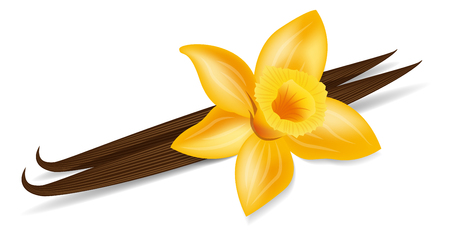 vanilla flower vector on white background