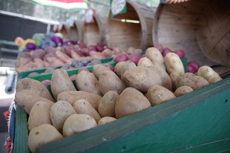 ampa Bay Farmers Market - Fresh Farmers Market Fruit and Vegetable Produce Stand