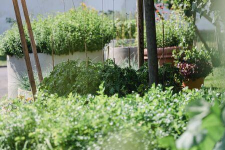 wonderful beautiful green herb garden