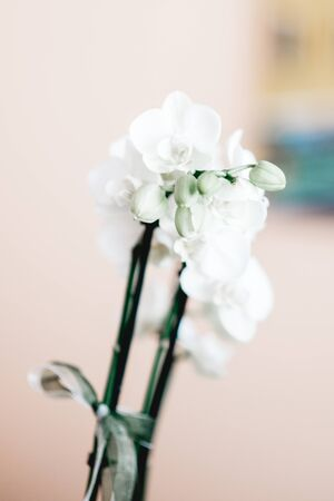 White orchid on a table with a event location