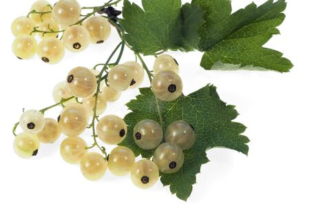 White currant photo