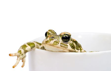 Green toad in cup Stock Photo - 627587
