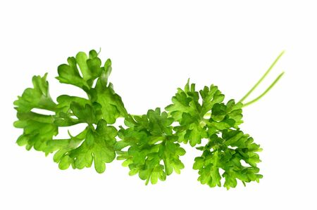 Top of parsley isolated on white background Stock Photo