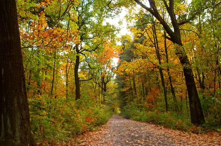 Colorful road through forest of the fall season. Stock Photo