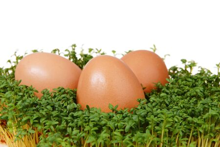 Fresh green cress and three easter eggs isolated on white background photo