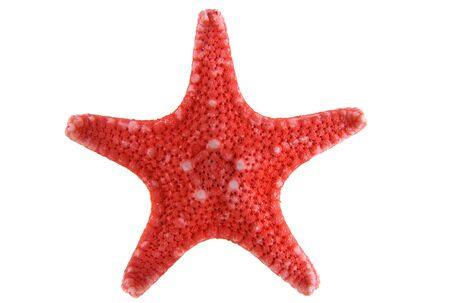 Rosso stella isolato su uno sfondo bianco close-up