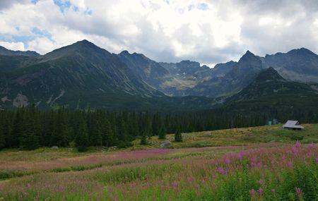 orla: View of the beatiful Polish mountain Tatras
