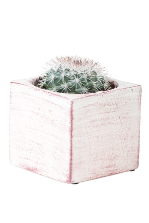 potted plant cactus: Cactus in pot of white background