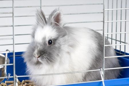 White angora bunny Stock Photo