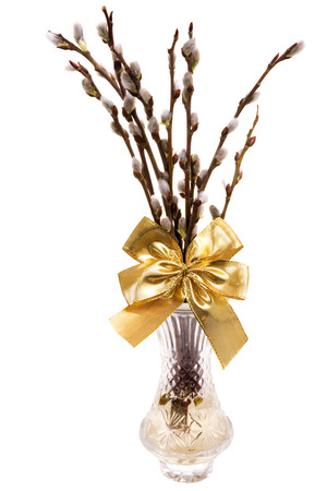 pussy tree: Easte catkins with golden ribbon in vase isolated on white background Stock Photo