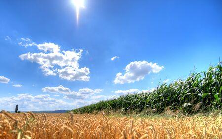 Wheat field, cornfield and summer sky Stock Photo