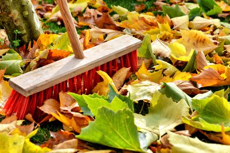 sweeping leaves photo