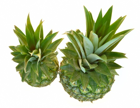 two isolated pineapples