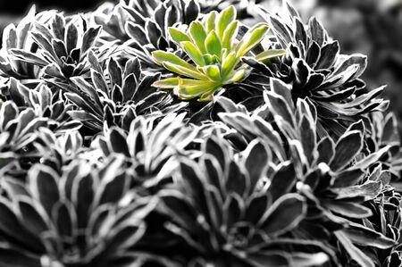 colorize: tender green over black background