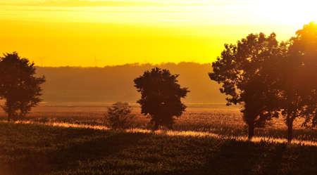 ber: Goldener Sonnenuntergang �ber den Feldern mit langen Schatten  Das Bild ist nicht bearbeitet, nur beschnitten