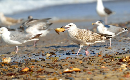 Group of seagulls on the beach Stock Photo