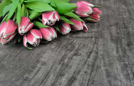 A bouquet of fresh tulips Stock Photo