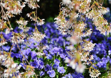 İlkbaharda çiçekler ve çiçekleri
