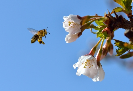 A bee on a flower in flight