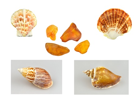 A collage of shells, snails and amber. Stock Photo