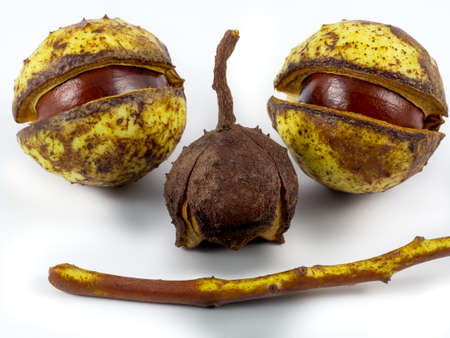 Chestnuts and a branch form a face