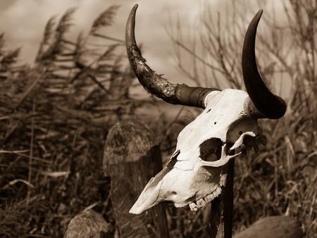 Cow skull on a pole Stock Photo