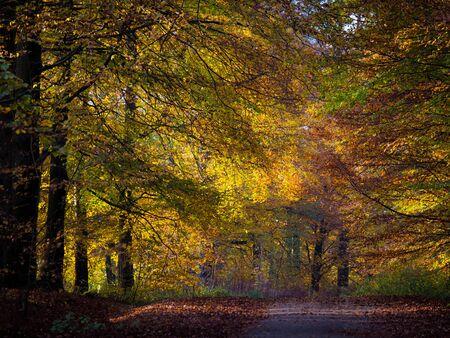hojas de colores: Hojas de colores en el bosque de oto�o