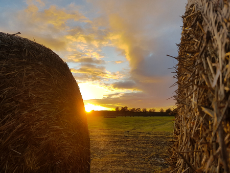 Straw bale in the sunset after harvest
