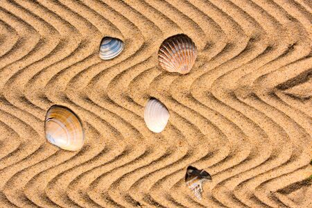 Shells in the wavy sand Standard-Bild