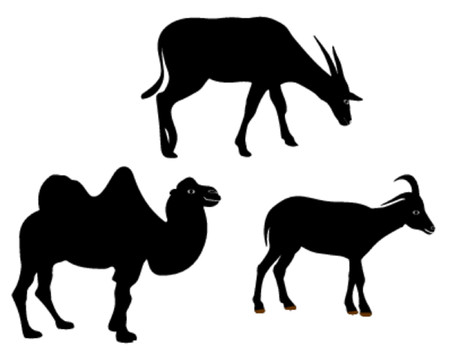 animals - vector ilustration Vector