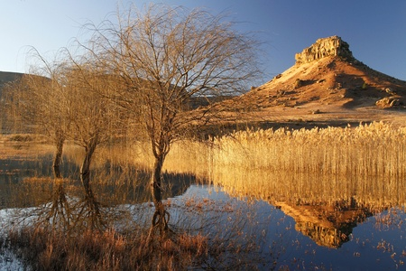 africa tree: Autumn dam sunset refections, Fouriesburg, South Africa