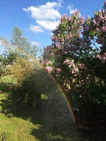 Little Rainbow in the garden
