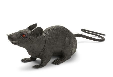 rata: Negro Plástico Juguete Rata Aislado en un fondo blanco.