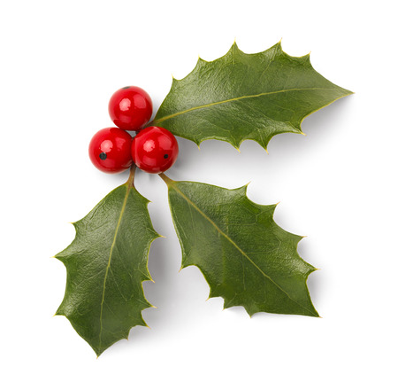 Holiday Decorations: Holly Leaves and Red Berries Isolated on White Background.