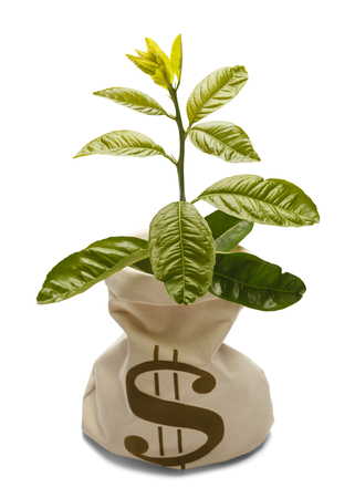 bank branch: Tree growing out of money bank bag isolated on white.