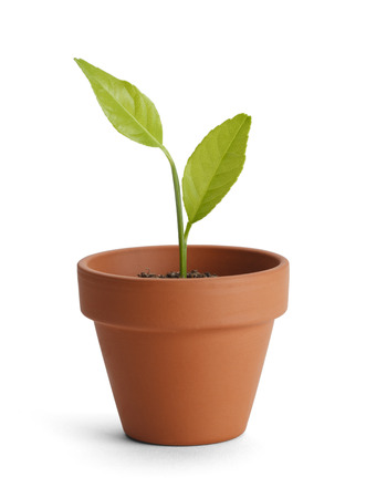 clay: New plant in small orange pot isolated on white background.